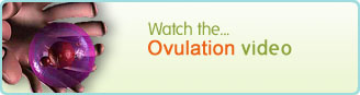 Ovulation Video