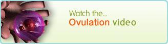 Ovulation Video