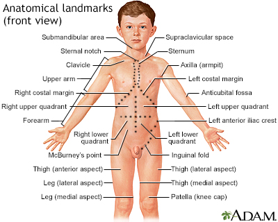 Anatomical landmarks, front view