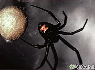 Araña viuda negra