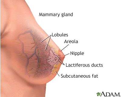 Mammary gland