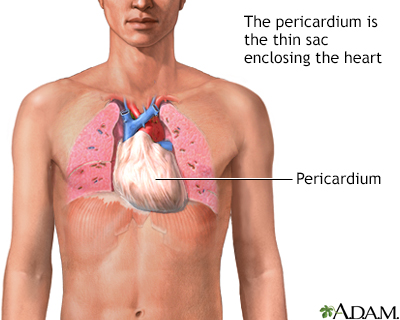 Pericardium