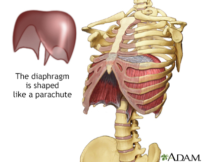 Diaphragm