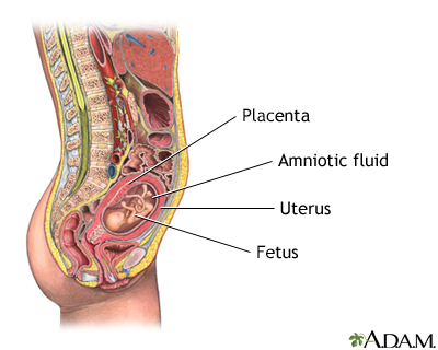 Anatomy test during pregnancy