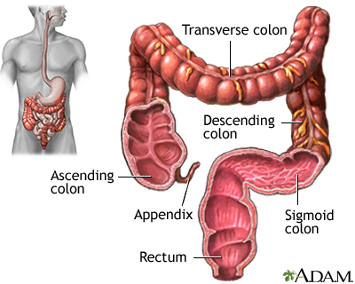 large intestine colon mclaren health information health