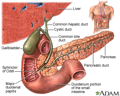 Gallbladder
