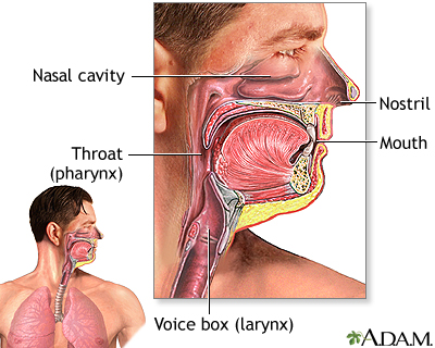 Tracto respiratorio superior