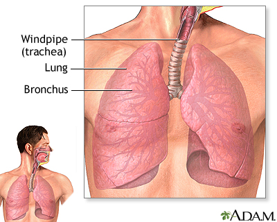 Lower respiratory tract
