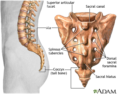 Sacrum