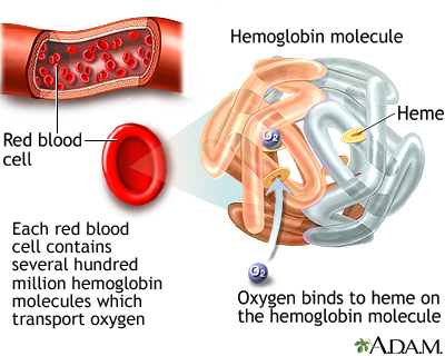 Hemoglobin