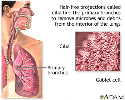 Respiratory cilia