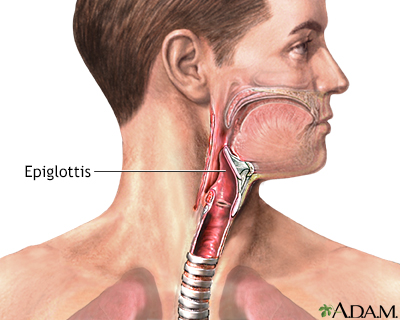 Epiglottis