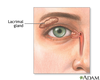 Lacrimal gland