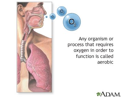 Aerobic organisms