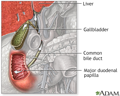 Bile pathway