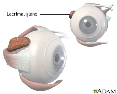 Lacrimal gland anatomy