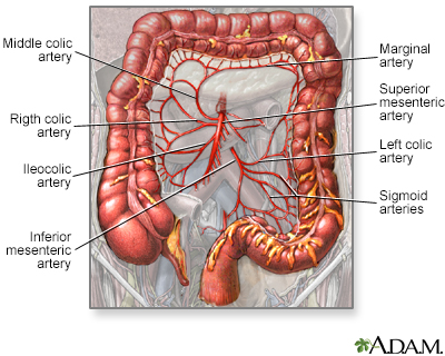 Blood supply of the large intestine