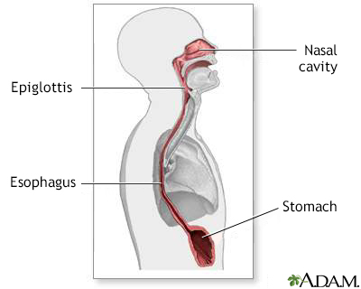 Esophagus