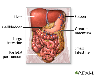 Abdominal organs