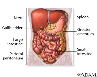 Organos abdominales