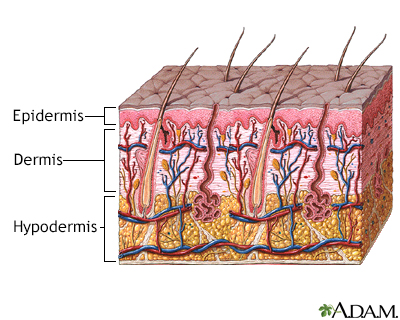 Skin layers