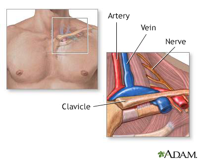 Thoracic outlet anatomy