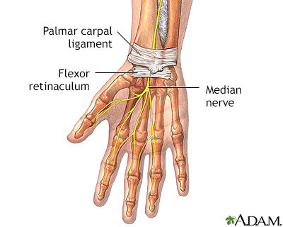 Wrist anatomy