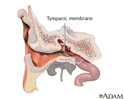 Tympanic membrane