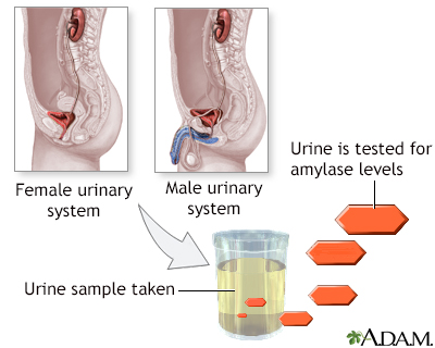 Amylase urine test
