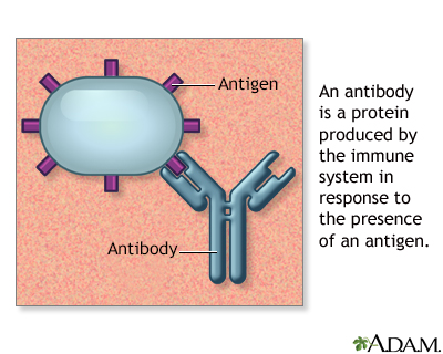 Antibodies