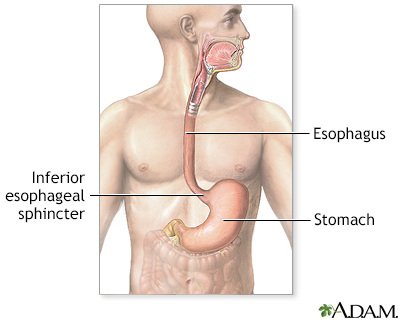 Upper gastrointestinal system