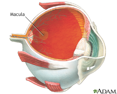 Macula
