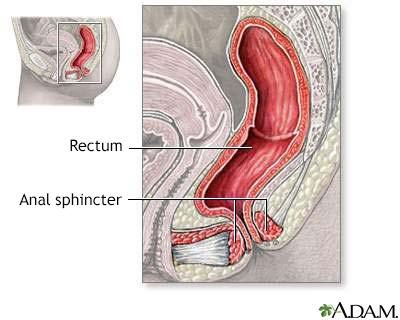 Anal sphincter anatomy