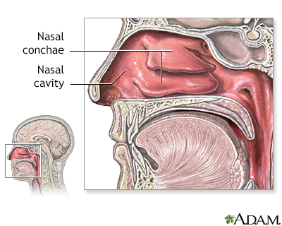 Nasal anatomy