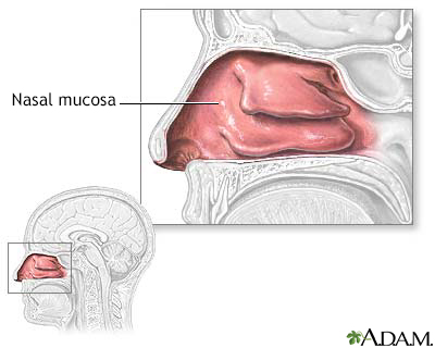 Mucosa nasal