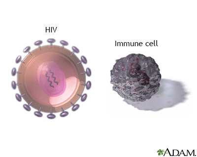 HIV virus and t-cells