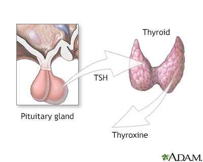 Pituitary and TSH