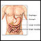 Inflammatory bowel disease - series