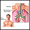 Mediastinum