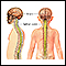 Central nervous system