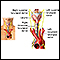 Nerves of the larynx