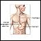 Sistema gastrointestinal superior