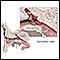 Eustachian tube anatomy