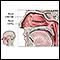 Anatomía nasal