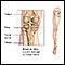Tibial nerve